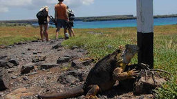 What Would Darwin Think - Man Vs Nature In The Galapagos