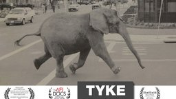 Tyke Elephant Outlaw - A Circus Elephant Who Made History