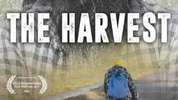 The Harvest - The Plight of Field Workers in Italy
