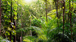 Why the Tropics Have So Many Plant Species